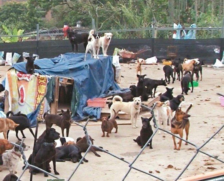 動保團體呼籲,各地方政府應落實家犬登記與絕育,才能有效從源頭管理流浪犬數量,給狗狗們更好的生存環境。